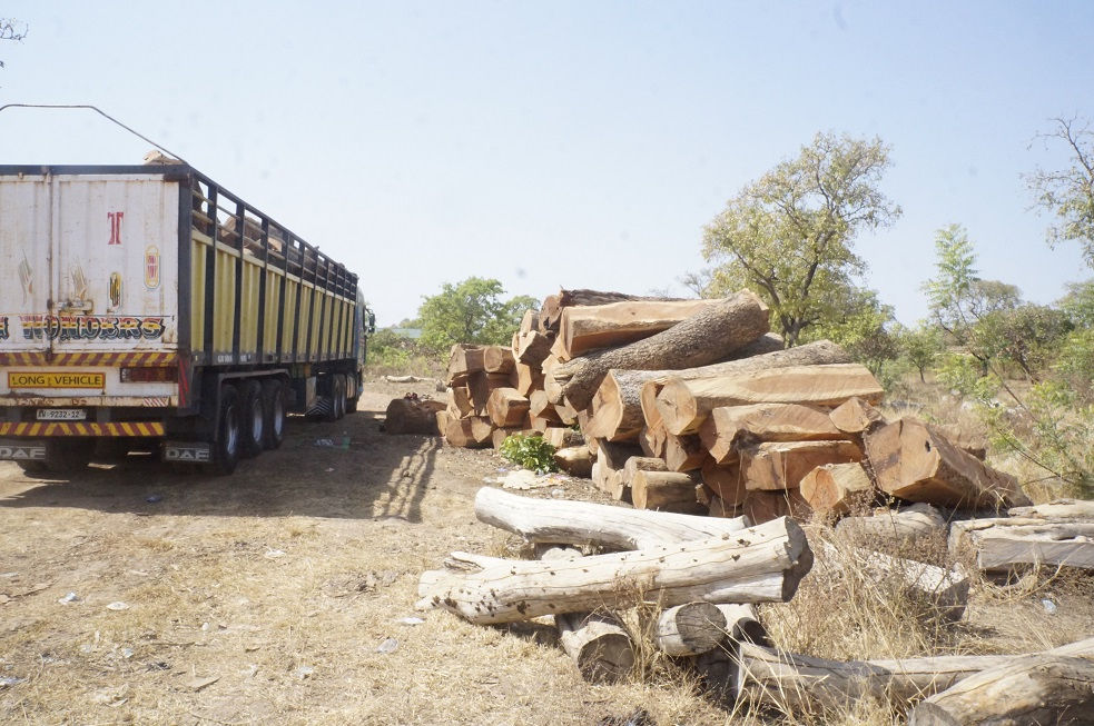 Reducing The Over Exploitation Of Rosewood In Northern Ghana